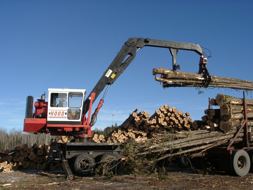Unloading freshly cut timber trees
