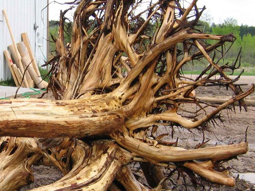 Root flare | trusses